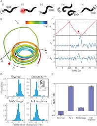 resolving coiled shapes reveals new reorientation behaviors in c