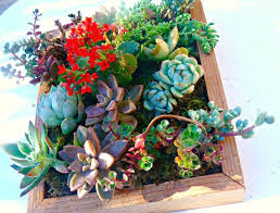 the 25 best succulent wall gardens ideas on pinterest succulent