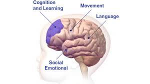 baby brain u2022