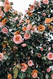 Beautiful Flower Pictures Best 25 Flower Photography Ideas On Pinterest Spring