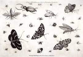 no 51 a new drawing book of butterflies insects u0026c seventy