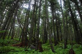 Alaska forest images Alaska 39 s state forests are incredible facts and photos jpg