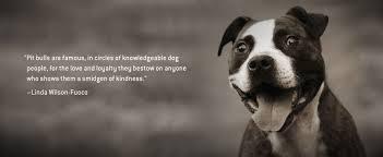 american pitbull terrier breeders st louis mutts n stuff