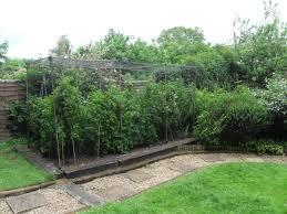 Vegetable Garden Netting Frame by Fruit Cages Diy Options Gardening Forum Gardenersworld Com