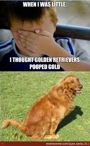 Golden Retriever Meme - what i thought golden retrievers did when i was little by