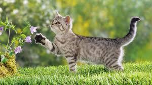 spirit halloween jumping cat spirit u0027s cat totem guidance to self love and self empowerment