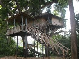 our tree house on a mango tree the water picture of