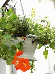 Galvanized Containers For Gardening Growing Vegetables In Containers Diy