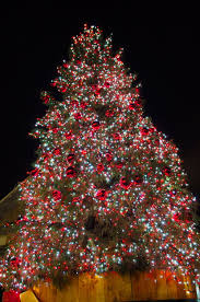 annual tree lighting terra