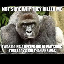 Gorilla Memes - dank harambe memes absorb the internet