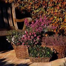 herbstbepflanzung balkon herbstbepflanzung balkonkästen garten pflanzen news