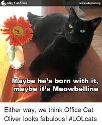 Lol Cat Meme - 25 best memes about lolcat lolcat memes