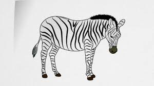 how to draw a zebra step by step youtube