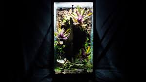setup u0026 plant your naturalistic vivarium 10g aquarium to viv