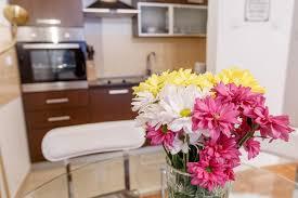 linden flower linden flower apartment subotica serbia booking