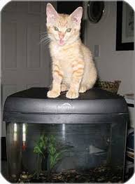 cat cremation cat cremation services buckleigh pet and large animal