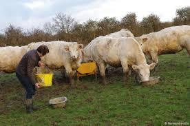 chambre agriculture haute normandie agriculture biologique ces 1200 fermes bios de normandie actu fr