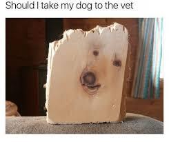 Dog At Vet Meme - should i take my dog to the vet dog meme on me me