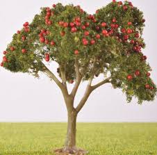 pl25103 80mm fruit tree with fruit the model tree shop