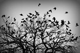 crows gregfallis com