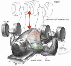 Bench Press Program Chart Dumbbell Bench Press Gym Workout Chart