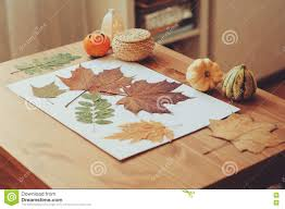 preparations for autumn craft with kids herbarium from dried