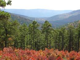 Oklahoma forest images Talimena national scenic byway the ouachitas talimena national jpg
