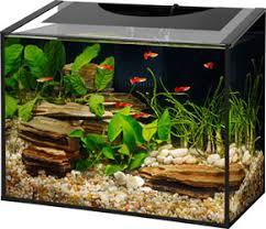 Aqueon Led Light Ascent Led Aquarium Kit Aqueon Products Glass