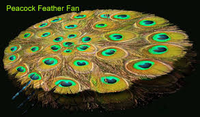 peacock feather fan peacock feather fan manufacturer and exporter in india