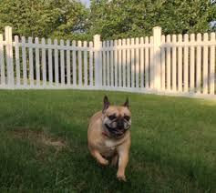 Dog Backyard Playground by Rescued Dog Gets A Backyard Playground With A Vinyl Fence Wambam