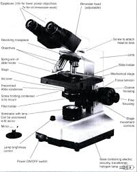 compound light microscope parts and functions microscope diagram by redtarkin on deviantart pleasing thatswhatsup