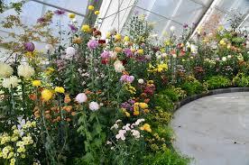 Clark Botanical Gardens Flowers Inside The Robert Clark Conservatory Picture Of Ballarat