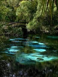 Florida natural attractions images Best 25 florida ideas florida 2017 florida trips jpg