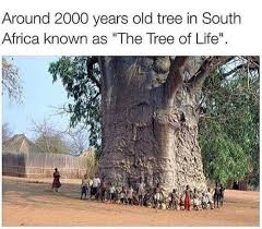 Tree Meme - the tree of life in south africa meme by peebee memedroid