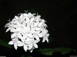 small white flowers small white flowers wallpaper 20360 open walls