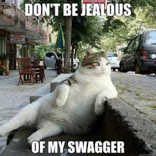 Swagger Meme - cats offering helfpul advice for lindsay lohan humor hilarious