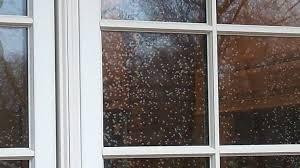 foggy windows windowreplacementrepair