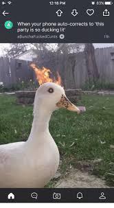 Meme Exles - ducking meme the best duck 2018