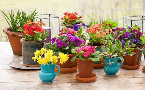 modern plant pots plant pots white teracotta flower pot 3840x2400 wallpaper