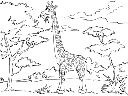 baby giraffe coloring pages west african giraffe coloring page