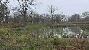 native plant plugs chicago district u003e missions u003e civil works projects u003e eugene field