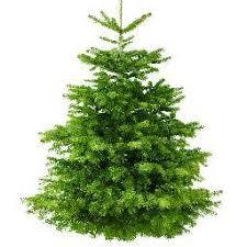 real christmas tree real christmas trees realxmastreeltd