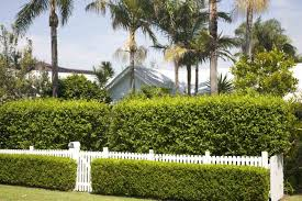 remarkable good plants for privacy fence gallery best image