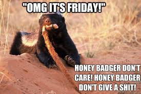 Honey Badger Memes - omg it s friday honey badger don t care honey badger don t give