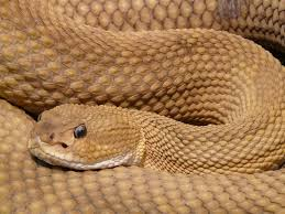 How To Avoid Snakes In Backyard Snake Sightings How To Prevent U0026 Safely Remove Snakes