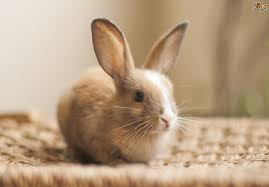 how much does it cost to buy a lamborghini aventador how much does it cost to keep a pet rabbit pets4homes