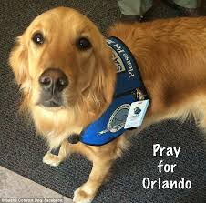 Comfort Retrievers Orlando Shooting Victims And Families Supported By Comfort Dogs