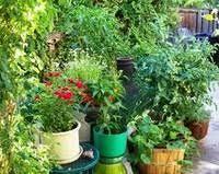 Urban Gardens Phoenix - growing vegetables in the desert phoenix home u0026 garden