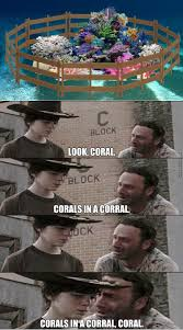 Coral Meme - coral memes best collection of funny coral pictures