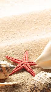 shells on the golden sand from the beach hd wallpaper wallpaper